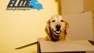Tips For Moving With Pets in 2017