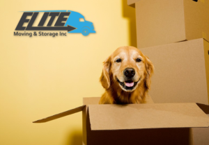 Elite Moving Chicago Pet Tips