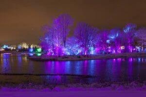 trees illuminate lights purple blue