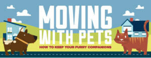 moving-pets-cat-dog-cartoon-graphic