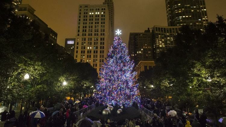 chicago christmas tree