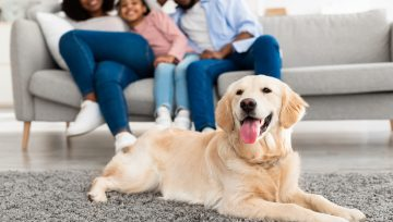 How to Make Your Move as Comfortable as Possible for Your Furry Family